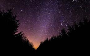 Картинка лес, небо, звезды, силуэт