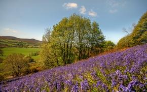 Картинка цветы, дерево, склон, Уэльс