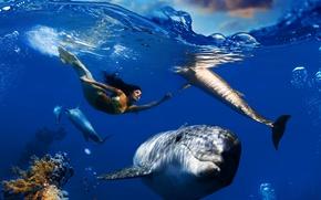 Обои море, волны, небо, облака, рыбы, пузырьки, русалка, кораллы, дельфины, подводный мир, под водой, плавает