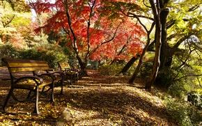 Картинка Осень, Парк, Fall, Листва, Park, Autumn, Colors, Листопад, Leaves, Скамейки