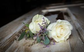 Картинка листья, роза, лепестки, бутон, rose, цветение, petals, blossoms, Bud