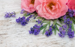 Картинка цветы, розовые, бутоны, wood, pink, flowers, лаванда, bud