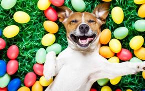 Обои трава, собака, colorful, Пасха, happy, dog, spring, Easter, eggs, holiday, funny, яйца крашеные