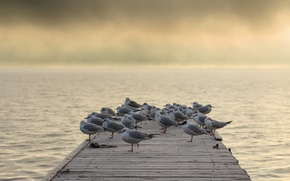 Картинка мост, птицы, туман