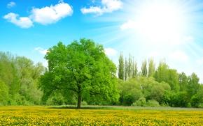 Картинка зелень, лето, небо, солнце, облака, лучи, деревья, цветы, поляна, желтые, одуванчики