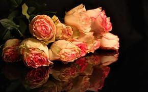 Картинка цветы, темный фон, розовый, Розы, бутоны