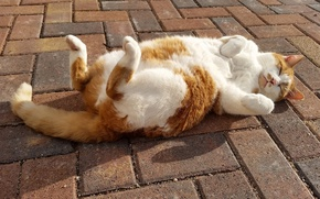 Обои кошка, кот, релакс, сон, лапки, тротуар, расслабон, спящая