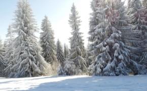 Картинка Grafika, Zima, drzewa, Fractailus