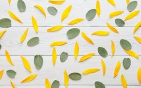 Обои листья, текстура, ФОН, лепестки