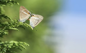 Картинка трава, макро, бабочки, природа, пара