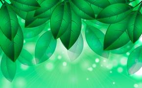 Картинка листья, рисунок, зеленые