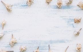 Картинка фон, ракушки, морской