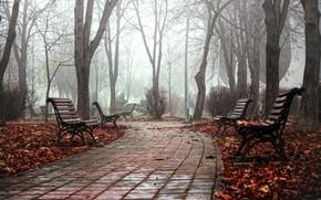 Обои туман, скамья, парк, осень, город