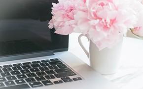 Картинка цветы, букет, ноутбук, мрамор, pink, flowers, пионы, peonies, tender, marble