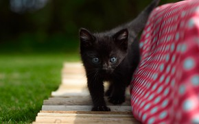 Картинка котенок, малыш, чёрный котёнок