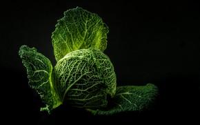 Картинка темный фон, Овощи, Капуста