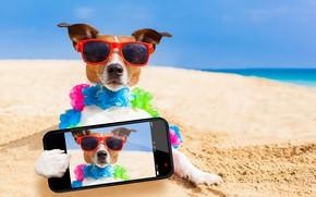 Картинка песок, море, пляж, солнце, фото, отдых, юмор, очки, боке, смартфон, Джек-рассел-терьер