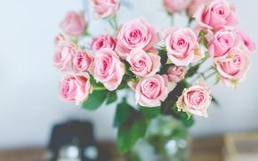 Обои розы, букет, нежные, розовые