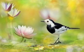 Картинка птица, пятна, нимфея