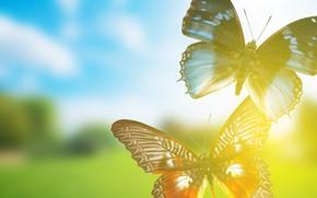 Картинка бабочки, рендеринг, фон, background, rendering, butterflies
