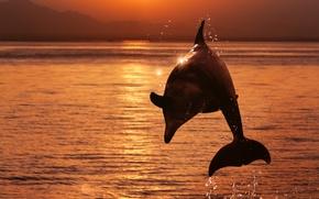 Картинка море, небо, вода, солнце, брызги, дельфин, блики, прыжок, берег, зарево