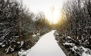 Картинка зима, лес, мост