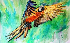 Картинка фон, крылья, попугай