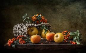 Обои яблоки, корзинка, пираканта, фон, натюрморт, ягоды