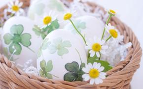 Картинка ромашки, яйца, Пасха, Праздник