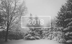 Картинка wallpaper, white, christmas, new year, trees, winter, snow, minimalistic, 2018