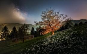 Картинка цветы, туман, утро, яблоня