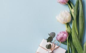 Картинка цветы, фон, весна, Тюльпаны, Подарок