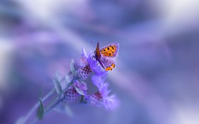 Картинка макро, фон, бабочка, растение