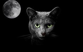 Обои луна, кошка, ночь, фантазия