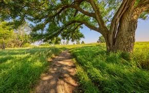 Картинка дорога, лето, дерево