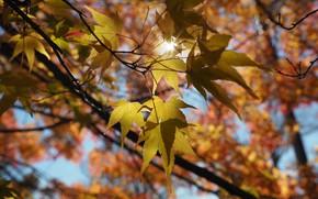 Картинка листья, дерево, лучи света