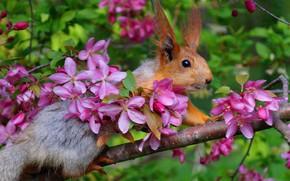 Картинка весна, яблоня, белки, апрель