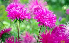 Картинка осень, цветы, природа, красота, растения, позитив, сентябрь, флора, астры