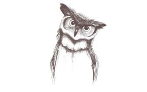 Картинка сова, птица, минимализм, светлый фон, owl