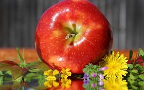 Картинка цветы, яблоки, одуванчики