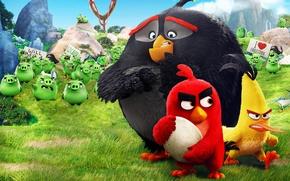Обои film, Bomb, Angry Birds, pi, AB, Chuck, birds, Bad Piggies, animated movie, Red, angry, pirate, ...