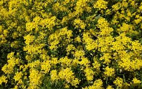 Картинка макро, цветы, текстура, полевые, жёлтые, mamala ©