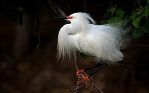 Картинка дерево, птица, белая, цапля