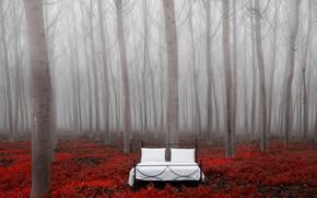 Картинка деревья, природа, кровать