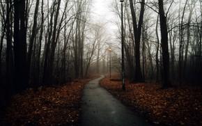 Картинка дорога, туман, парк
