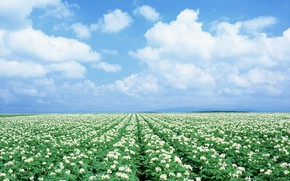Картинка Небо, Поле, Ромашки, Japan, Field, Chamomile