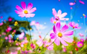 Картинка макро, цветы, фон, лепестки
