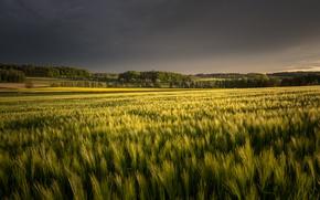 Картинка поле, лето, природа, вечер