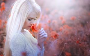 Картинка поле, волосы, маки, блондинка