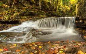 Картинка осень, лес, листья, деревья, река, скалы, поток, Канада, пороги, Квебек